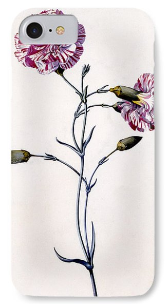 Carnation IPhone Case by Georg Dionysius Ehret