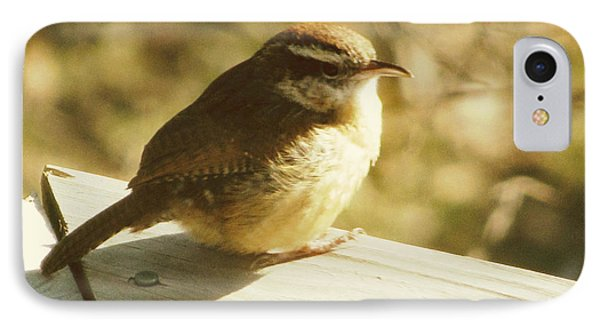 Carolina Wren IPhone Case by Amy Tyler