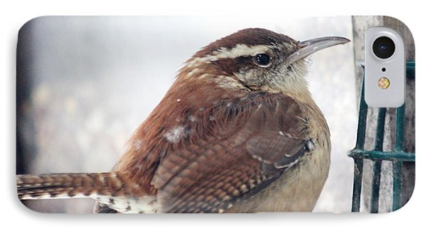 Carolina Wren IPhone Case by Diane Merkle