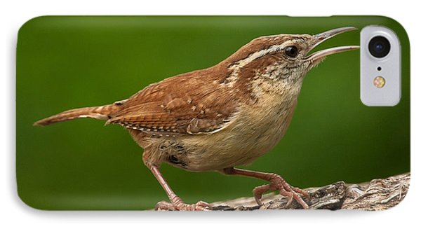 Carolina Wren IPhone Case by Jim Moore