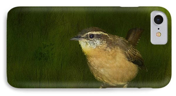 Carolina Wren IPhone Case by Steven Richardson
