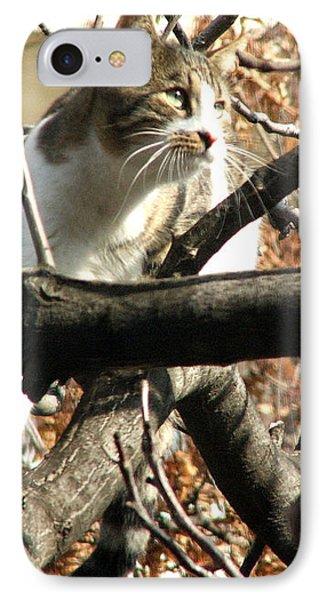 Cat Hunting Bird IPhone Case by Judi Saunders