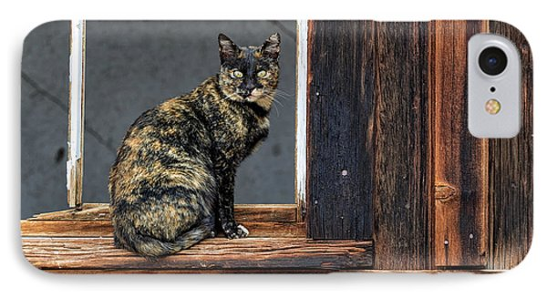Cat In A Window IPhone Case by Scott Warner