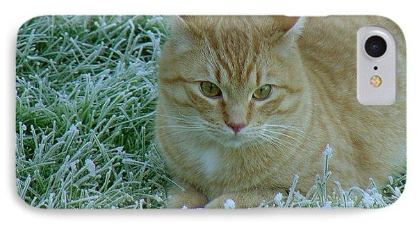 Cat In Frosty Grass IPhone Case by Shirley Heyn