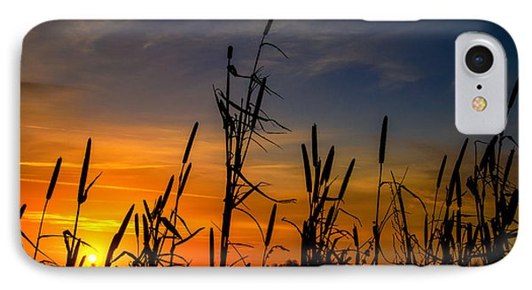 Cat Tails At Sunrise  IPhone Case by John Harding