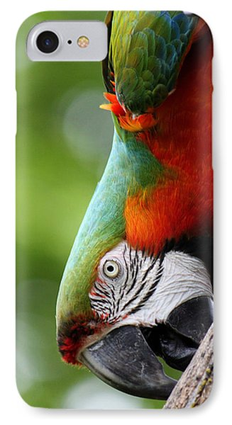 Catalina Macaw II Phone Case by Nancy  Coelho