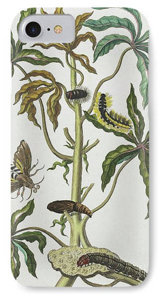 Caterpillars And Insects With Foliage IPhone Case by Maria Sibylla Graff Merian