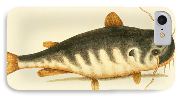 Catfish IPhone 7 Case by Mark Catesby