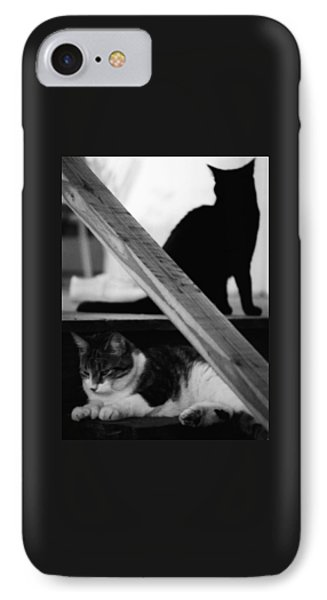 Cats Pose For Money And Fame IPhone Case by David Gilbert
