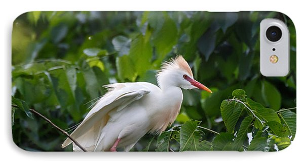 Cattle Egret At Rest IPhone Case