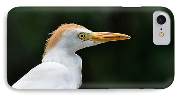 Cattle Egret Close-up Phone Case by Al Powell Photography USA