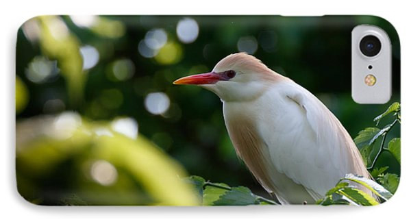 Cattle Egret In Oklahoma IPhone Case