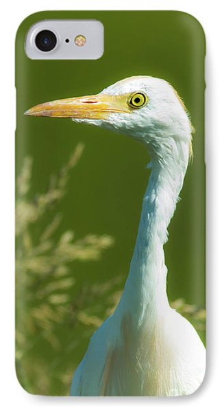Cattle Egret  IPhone Case by Robert Frederick