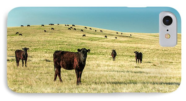 Cattle Grazing On The Plains IPhone Case by Todd Klassy