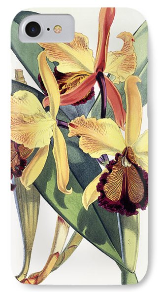 Cattleya Dowiana IPhone Case by Walter Hood Fitch