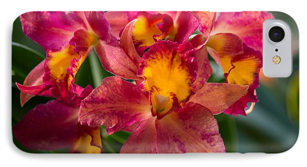Cattleya Orchids IPhone Case by Fiona Craig