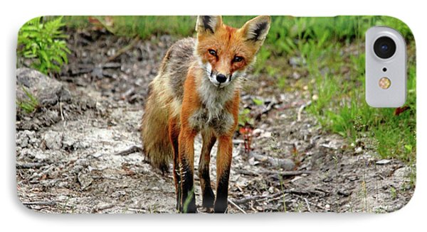 IPhone Case featuring the photograph Cautious But Curious Red Fox Portrait by Debbie Oppermann