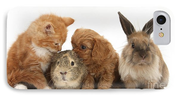 Cavapoo Pup, Rabbit, Guinea Pig IPhone Case by Mark Taylor