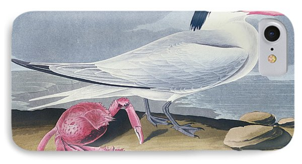 Cayenne Tern Phone Case by John James Audubon