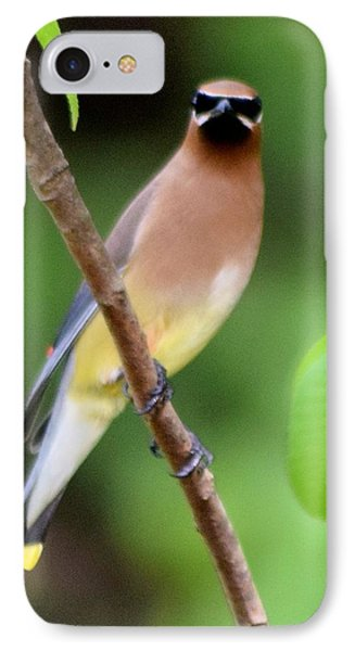 Cedar Wax Wing 2 IPhone 7 Case by Sheri McLeroy