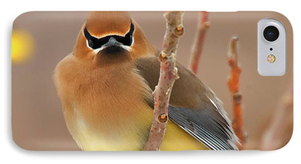 Cedar Wax Wing IPhone 7 Case by Carl Shaw