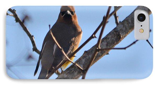Cedar Wax Wing On The Lookout IPhone Case by Barbara Dalton