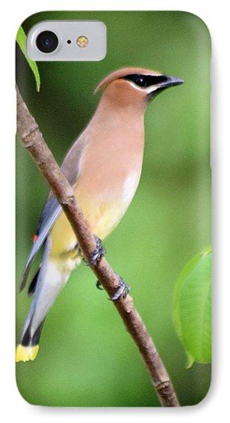 Cedar Wax Wing Profile IPhone Case by Sheri McLeroy