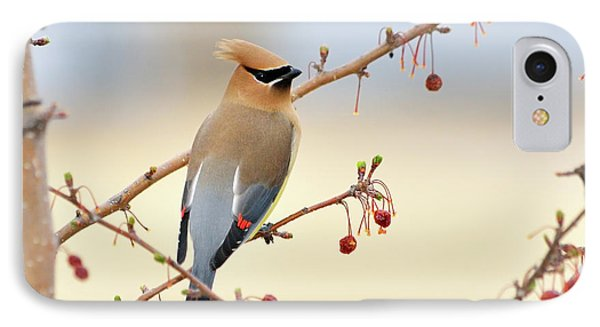 Cedar Waxwing Phone Case by Betty LaRue
