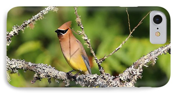 Cedar Waxwing  IPhone 7 Case by Carol R Montoya