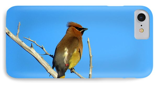 Cedar Waxwing IPhone 7 Case by Dianne Cowen
