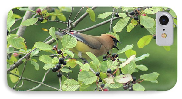 Cedar Waxwing Eating Berries IPhone Case by Maili Page