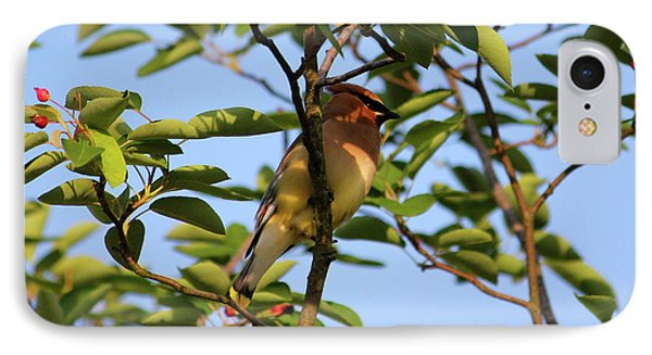 Cedar Waxwing IPhone Case by Mark A Brown
