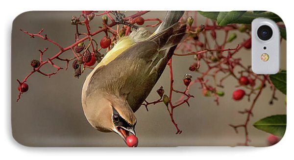 Cedar Waxwing With Toyon Berry IPhone Case