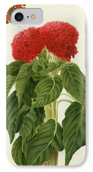 Celosia Argentea Cristata And Butterfly IPhone Case