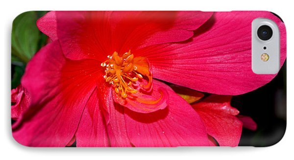 IPhone Case featuring the photograph Centerpiece - Pink Begonia 007 by George Bostian