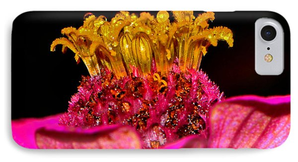 Centerpiece - Zinnia Crown 001 IPhone Case by George Bostian