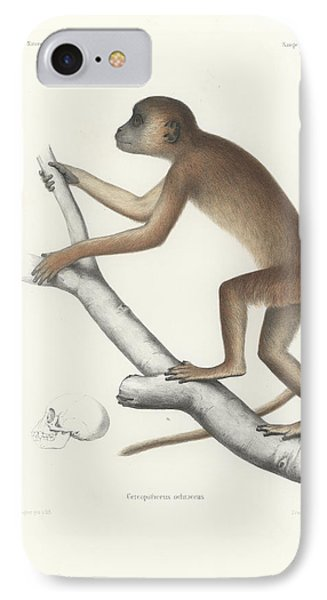 Central Yellow Baboon, Papio C. Cynocephalus IPhone Case by J D L Franz Wagner