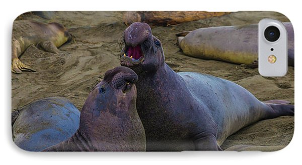 Challenging Elephant Seals IPhone Case