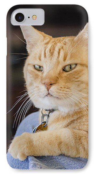 Charlie Cat IPhone Case by Allen Sheffield