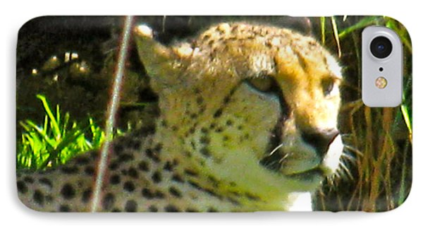 Cheetah   Face Phone Case by Debra     Vatalaro