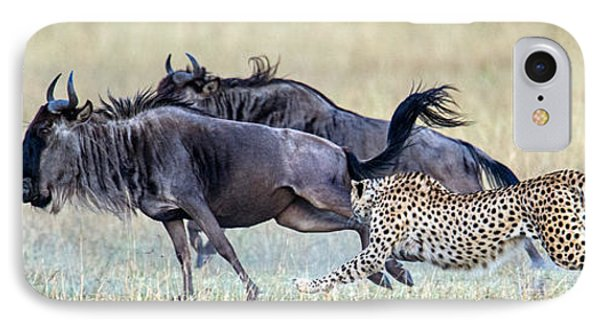 Cheetah Acinonyx Jubatus Hunting Blue IPhone Case by Panoramic Images