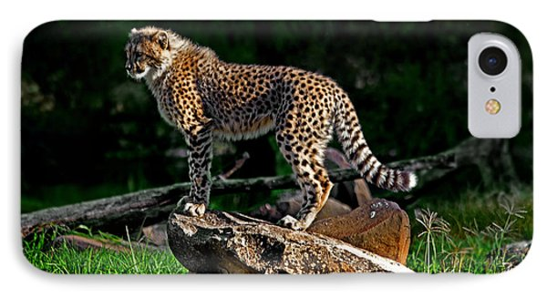 Cheetah Cub Finds Her Pride Rock IPhone Case by Miroslava Jurcik