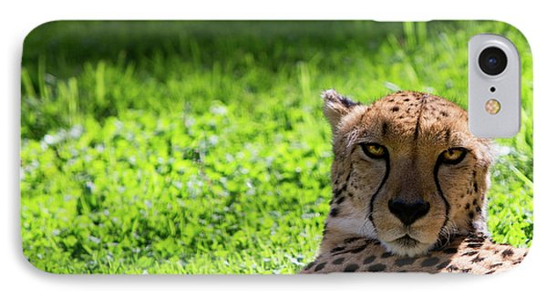 IPhone Case featuring the photograph Cheetah Face by Rebecca Cozart