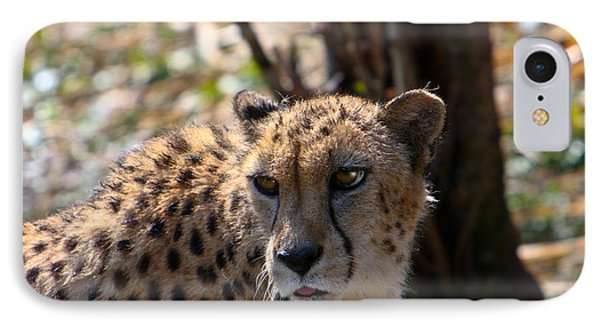 Cheetah Gazing Phone Case by Douglas Barnett