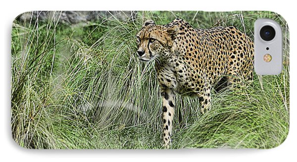 Cheetah Hunting IPhone Case