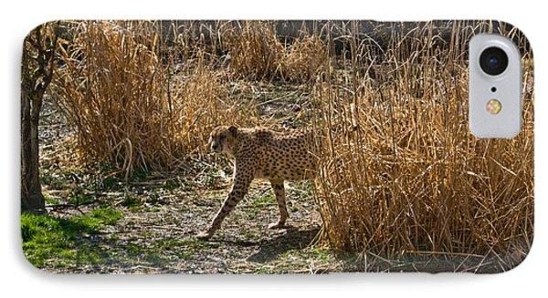 Cheetah  In The Brush Phone Case by Douglas Barnett