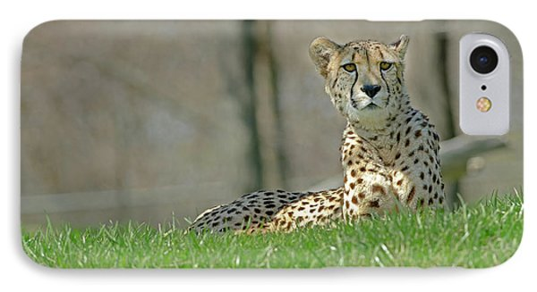 IPhone Case featuring the photograph Cheetah by JT Lewis