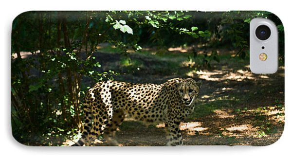 Cheetah On The In The Forest 2 Phone Case by Douglas Barnett