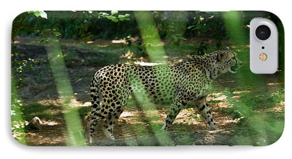 Cheetah On The In The Forest Phone Case by Douglas Barnett
