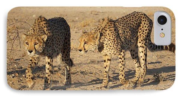 Cheetahs IPhone Case